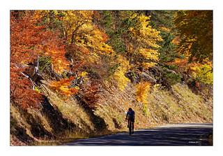 Herbst in der Provence - Mont Ventoux