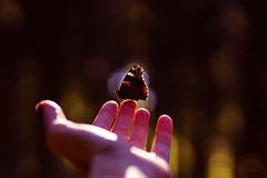 see.you. (_andrea-) Tags: admiral schmetterling insekten hand bokehs lights wood butterfly carlzeiss sonyalpha7m2 sonnenlicht sonya7m2 planar1450za objektiv mount mood