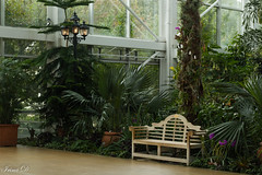 Before the day is over. .  . HBM (Irina1010) Tags: bench plants glasshouse athensbotanicalgarden indoors canon