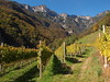 Weinberge in Tramin - Südtirol (IS OZ Photo) Tags: südtirol tramin italien weinberg alpen olympus zuiko isoz southtirol alps vineyard italy italia landschaft landscape trentino termeno altoadige bozen bolzano berge mountains colorful bunt autumn herbst e620 esystem ft dslr 1454 fourthirds spiegelreflex 2017 oly olympuse tirol tyrol scenery outdoor outofnature out nature natur urlaub gebirge bäume trees wald forest colors farben weg pfad path europe europa travel reise campagne fav500 5000views 500 500faves campagna campo chemin flickr