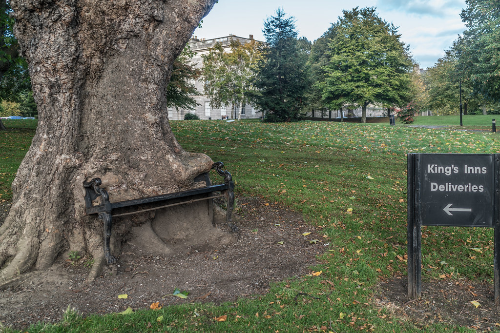 I REFER TO THIS AS THE HUNGRY TREE [LOCATED IN KINGS INNS PUBLIC PARK DUBLIN 7]-133229