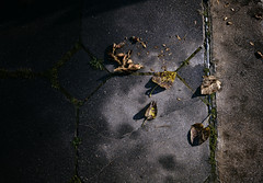 Fall is coming (KHK Images) Tags: nature leaves fall autumn lifecycle circleoflife start finish end texture rusty crusty rx100m2