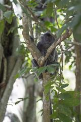 DSC_5505 (Almixnuts) Tags: kualaselangor nature naturepark kualaselangornaturepark