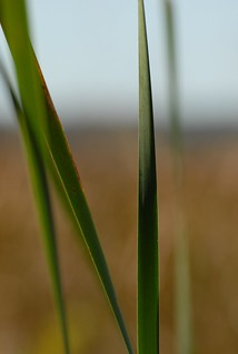 wetland mirage