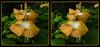 Longwood Gardens Flowers 17 - Parallel 3D (DarkOnus) Tags: pennsylvania bucks county panasonic lumix dmcfz35 3d stereogram stereography stereo darkonus longwood gardens flowers scenic scenery flower botanical garden popout ttw parallel