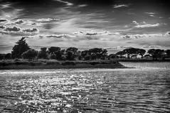 Les Salins du midi en Camargue (delphine imbert) Tags: nature noir blanc black white monochrome camargue salins sel mer eau récolte histoire soleil pins provence aiguesmortes lumière brillant reflet coucher