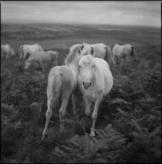 Cefn Bryn (steve-jack) Tags: hasselblad 501cm 80mm cb ilford delta 100 perceptol wales film 120 6x6 medium format gower
