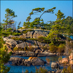The West Wind (Rodrick Dale) Tags: windswept pines rock water georgian bay island ontario canada lake huron west wind