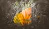 Autumn starts (Dhina A) Tags: sony a7rii ilce7rm2 a7r2 tamron sp 350mm f56 tamronsp350mmf56 prime ad2 adaptall2 mirrorlens 06b catadioptric reflex cf tele macro autumn fall colors