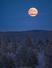 Rising Moon (laurilehtophotography) Tags: jyväskylä kuu syksy suomi finland laajavuori autumn fall moon landscape nature snow forest trees evening nikon d610 nikkor 200500mm amazing europe clouds