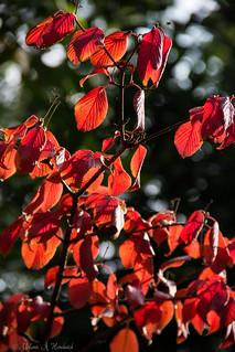 Autumn Leaves Bokeh
