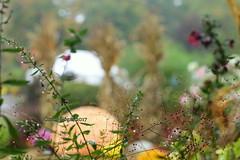 Autumn In New England (AutumnSunOriginals) Tags: newengland yankeecandle deerfieldma pumpkins cottagegarden