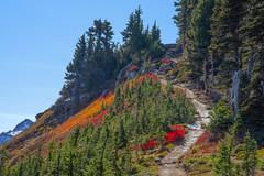 Alta Vista Trail (wplynn) Tags: mtrainiernationalpark mountrainiernationalpark mtrainier mountrainier mt mount mountain rainier volcano volcanic washington state cascade cascaderange altavistatrail autumncolor autumn