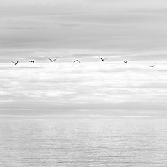 Melodía en do mayor (Eugercios) Tags: aves pajaros birds bird paxaro mar sea pacifico fly volar minimal aire air blanco negro white black branco preto