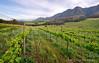 Lismore Vineyards (Panorama Paul) Tags: paulbruinsphotography wwwpaulbruinscoza southafrica westerncape greyton lismorewineestate vineyard overberg mountains clouds nikond800 nikkorlenses nikfilters