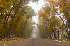 October 14, 2017 - Fog envelops the Rocky Mountain Arsenal. (Tony's Takes)