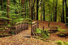 Autumn (PerfectCaptureNI) Tags: autumn forest bridge leaves green golden orange trees october fuji portglenone ireland northenireland countyantrim color colour landscape seasonal ulster