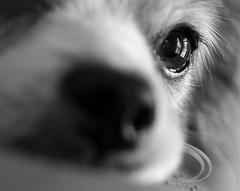 Almost missed (risaclics) Tags: macro mondays make me smile 50mm18 7dw dogs nikond610 october2017 risa blackandwhite sidelit macromondays makemesmile