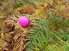 In the pink-Smile on Saturday (katy1279) Tags: smileonsaturday tinytreasuresinflora fernspinkdogballfetchgogetitboy