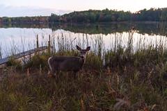 Edit -1-5 (Dane Van) Tags: ccr canadacreekranch puremichigan atlantamichigan 5dclassic 35mm lakegeneva sunset deer dock