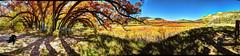 Erik and Joel at Oak Point (JoelDeluxe) Tags: riochama wilderness oak point ojito wildscenic river forestroad151 chamacanyon santafenationalforest fall 2017 erik black dog orange yellow oaks hdr panorama landscape joeldeluxe grass tree sky surreal