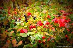 DSC_0963 (small) (zahidniak) Tags: ternopil autumn taraskokovsky beauty amazingnature ukraine