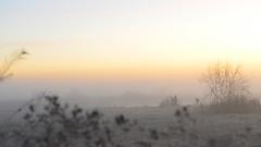 DSC_8729 in the mist (futzr.fotoz) Tags: yakima river valley sunnyside mabton opening day 2017 duck hunting hunter silhouette mist fog gray orange sunrise weeds shotgun