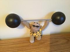 #RaiseTheBar (Martellotower) Tags: flickrfriday raisethebar munkeh weightlifting monkey
