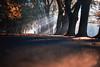 Be the squirrel (ewitsoe) Tags: autumn nikond80 ewitsoe city park trees manwalking lowtotheground leaves fallingleaves windy shade shadows lightstreamingthroughthetrees dawn warmair poznan poalnd pathway 35mm street urban soloman manwalkignalone