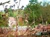 2017-10-20 Villers-Campeau morning (15)secret wood entrance (april-mo) Tags: secretwood boissecret autumn automne deadleaves