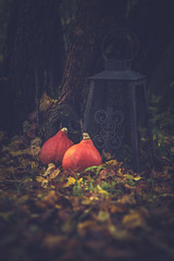 Getting ready for Halloween (mirri_inc) Tags: pumpkin autumn colors spice dark halloween outdoors nature october moody tones