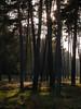Trees (heinrichralf) Tags: zuiko1454mm raw e1 olympus lightroom nature