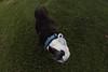 (ashtothemooon) Tags: oklahoma outdoors outside canon rebel opteka fisheye buddy boston terrier dog doggo