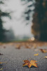So lonely (mripp) Tags: art vintage retro old bokeh ball leaf blast autumn herbst street strafe nature natur abstract leica m10 summicron 50mm