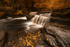 Golden fall (technodean2000) Tags: pont cwmfedwen merthyr tydfil south wales uk nikon d610 d810 lightyroom lightroom waterfall autumn fall water tree ©technodean2000 welsh photographer technodean2000 lr ps photoshop nik collection flick photo flickr wwwflickrcomphotostechnodean2000 www500pxcomtechnodean2000