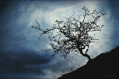 Tree, Hill, and Vortices (shawn~white) Tags: nature alteredstate blue dark dream dreamy enchanting energy magic magical mystery mystic night spiritual texture tree trippy