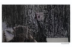 P1110337er (Leonie Polah) Tags: urban behindglass reflectie dirt amsterdam 2017 leoniepolah window reflection colour selfie