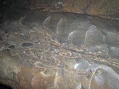Scallops (Rose's Pass, Mammoth Cave, Kentucky, USA) 13 (James St. John) Tags: roses pass scallops dissolution limestone ste genevieve mississippian mammoth cave ridge national park kentucky caves