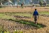 Bali, Indonesia (Yee-Kay Fung) Tags: bali indonesia ubud farmer ricefields