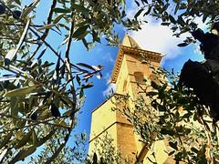 El campanario entre el olivo (yanitzatorres) Tags: autumn otoño verde green naranja orange blue azul tree olives sky cielo árbol olivas olivo spain españa navarra olite sanpedro campanario iglesia church