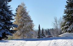 Early snow with tamarack--Explored (yooperann) Tags: snow frost october fall autumn tamarack larch tree upper peninsula michigan