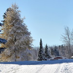 Early snow with tamarack--Explored thumbnail