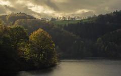 Autumn at the Rursee (Netsrak) Tags: herbst rursee licht schatten baum bäume wald natur eifel einruhr urft deutschland nrw wolke himmel