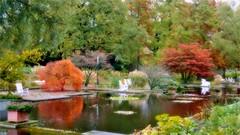 Autumn Vacation (farmspeedracer) Tags: autumn fall herbst 2016 park pond tree bush red orange silence isolation ill halloween october day light dark