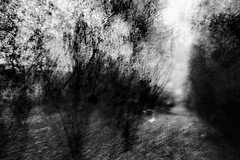 Wood at sunrise (peterggordon) Tags: icm intentionalcameramovement abstract wood forest trees blackandwhite monochrome mono painterly fujifilm fujifilmxf14mmf28r