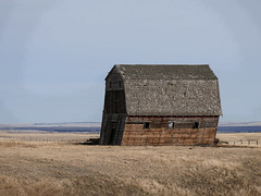 Fragile and leaning (annkelliott) Tags: alberta canada seofcalgary landscape scenery prairie field grassland crops rollinghills fence building structure barn wooden old abandoned weathered leaning shingles roof sky outdoor fall autumn 30october2017 fz1000 panasonic lumix annkelliott anneelliott ©anneelliott2017 ©allrightsreserved