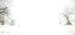 Refugio del Burrito Extremadura (jorgesarrion) Tags: peace paz animales animals burros donkies burritos dogs perros caballos horses arboles trees olivos aceitunas oils aceite trabajadores voluntarios workers work trabajo campo country landscape paraje eyesight friends amigos happy free feliz libre caravana charco luz light water agua barro tierra extremadura elrefugiodelburrito refugio me yo jorgesarrion cool nice good love amor pets cuidado