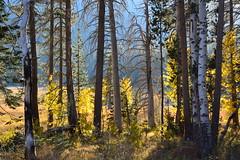 DSC_9248 (Schnauzergal) Tags: fallcolors fallfoliage naturebynikon nature trees california nikon landscape