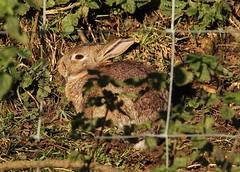 sunny-bunny - Bradford Dale (westoncfoto) Tags: