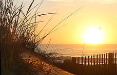 Ocean City Dunes (die Augen) Tags: dunes ocean city canon sl1 waves sunrise seascape water sand grass reflexion